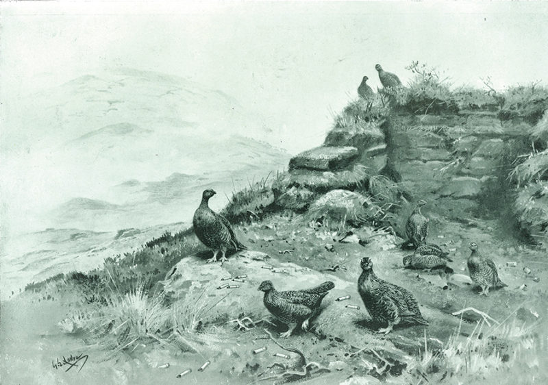 Grouse Security where death reigned